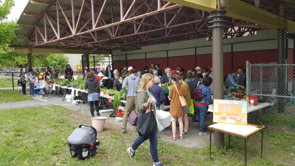 Visitors to the annual plant exchange at Jack Purcell Park. The exchange has grown in popularity and scope over the 10 years since its beginning, but costs have grown as well. Organizer Vivalda Griffin plans to expand the event in future to include vendors and entertainment.